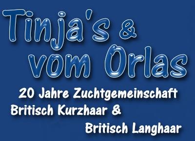 BKH und Scottish Fold Tinjas und von Orlas